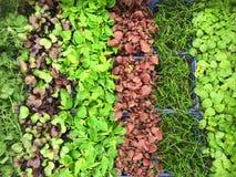 сад кресса предпосылки земледелия ароматичный Стоковое Изображение RF