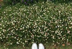 Сад маргаритки Стоковое Фото