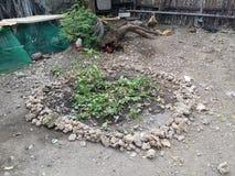 Сад, малый стоковое фото