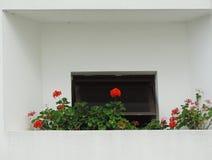 сад малый Стоковое Изображение RF