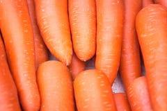 сад морковей свежий Стоковое Изображение