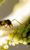 Сад муравья Стоковое Изображение RF