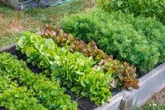 Сад общины Стоковое Изображение RF