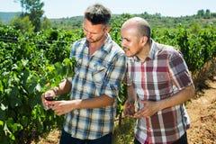 2 садовника стоя совместно в дворе и смотреть дерева виноградин Стоковые Фотографии RF