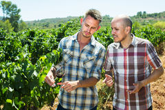 2 садовника стоя совместно в дворе и смотреть дерева виноградин Стоковое Изображение RF
