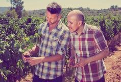 2 садовника стоя совместно в дворе и смотреть дерева виноградин Стоковое фото RF
