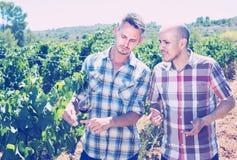 2 садовника стоя совместно в дворе и смотреть дерева виноградин Стоковые Изображения