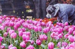 Садовники засаживая цветок в цветочном саде Стоковое фото RF