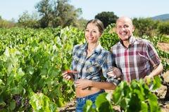 Садовники совместно в дворе дерева виноградин Стоковые Изображения RF
