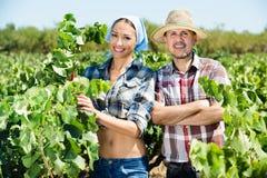 Садовники совместно в дворе дерева виноградин Стоковое Изображение RF