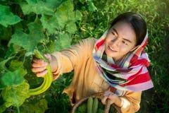 садовники Стоковая Фотография