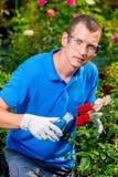 Садовник биолога обрабатывает заводы Стоковые Изображения RF