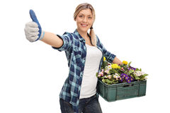 Садовник женщины держа шкаф цветков и давая большие пальцы руки вверх Стоковое фото RF