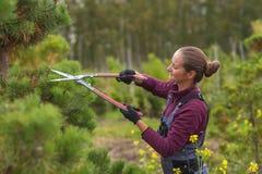 Садовник женщины режет сосну используя секаторы Стоковая Фотография