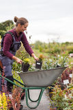 Садовник женщины с тачкой в саде, Стоковые Изображения RF