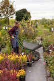 Садовник женщины с тачкой в саде, Стоковые Фото