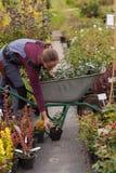 Садовник женщины с тачкой в саде, Стоковая Фотография RF