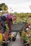 Садовник женщины с тачкой в саде, Стоковые Фотографии RF