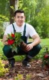 Садовник извлекая цветок от бака стоковые фото