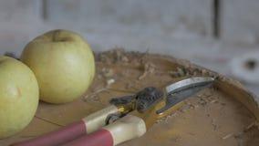 Садовник кладет ножницы на таблицу после работы Садовник позаботится о кусты акции видеоматериалы