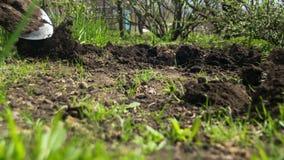 Садовник молодого человека выкапывает землю с лопаткоулавливателем в саде Промежуток времени сток-видео