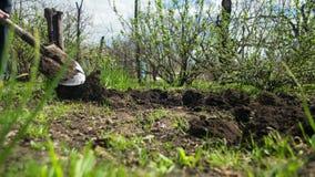 Садовник молодого человека выкапывает землю с лопаткоулавливателем в саде Промежуток времени видеоматериал