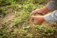 Садовник опытного человека держа позем Стоковые Фотографии RF