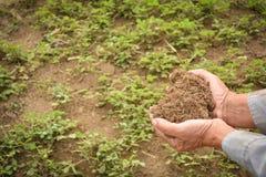 Садовник опытного человека держа позем Стоковая Фотография