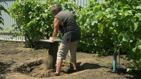Садовник пригвозженный металлопластинчатым к пню Таблица и пергола продукции в саде акции видеоматериалы