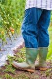 Садовник работая на саде Стоковые Фото
