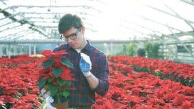 Садовник рассматривая красные цветочные горшки в gardenhouse 4K акции видеоматериалы