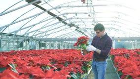 Садовник рассматривая красные цветочные горшки в gardenhouse 4K сток-видео
