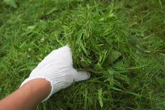 Садовник руки Стоковые Фотографии RF