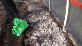 Садовник удабривает почву в парнике с деревянной золой акции видеоматериалы