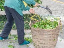 Садовник человека очищает вверх сад с его грабл Стоковая Фотография