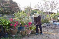 Садовник Стоковая Фотография