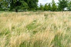 садовничает дворец kensington Стоковые Фотографии RF