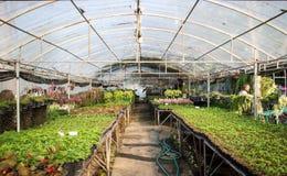 садовничать в куполе Стоковое фото RF
