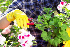 садовничать принципиальной схемы Засаживать цветки на саде Стоковое Изображение RF