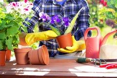 садовничать принципиальной схемы Засаживать цветки на саде стоковая фотография