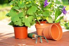 садовничать принципиальной схемы Засаживать цветки на саде стоковые фото