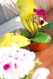 садовничать принципиальной схемы Засаживать цветки на саде стоковая фотография rf
