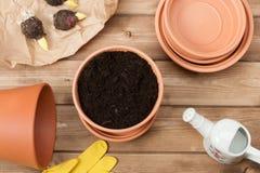 садовничать принципиальной схемы Шарики гладиолуса предпосылка может изолировано над белизной Стоковое Фото