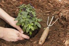 садовничать Стоковая Фотография RF