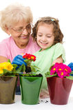 Садовничающ, засаживающ концепции Стоковое Фото