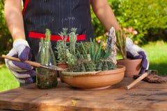 садовничая время Стоковое фото RF