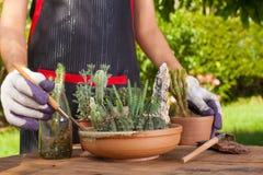 садовничая время Стоковые Изображения RF