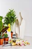 садовничая инструменты houseplants Стоковое Фото