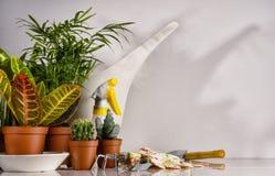 садовничая инструменты houseplants Стоковое Изображение RF