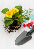 Садовничая инструмент и покрашенный цветок Стоковое Изображение